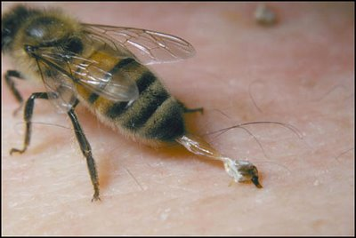 ferroada de abelha